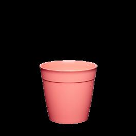 Cup Small Californian Shrimp